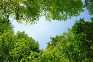 樹木葬は意外とポピュラー 世間の認知度と関心