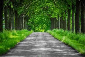 樹木葬の問題点と解消法