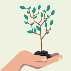 樹木葬は環境にやさしい!エコ効果
