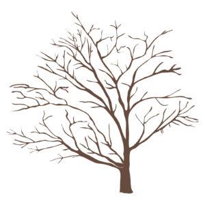 樹木葬で木が枯れたらどうする