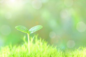 里山を育てる効果がある樹木葬!自然環境にも貢献します