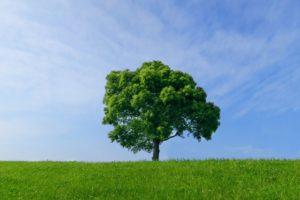 樹木葬は宗教不問で入ることができる!