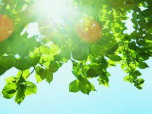 樹木葬に人びとの関心が集まる背景とは?