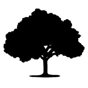 自分の家の庭で樹木葬は出来るのか?